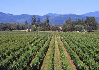 Bridgeview Vineyards Inc. image