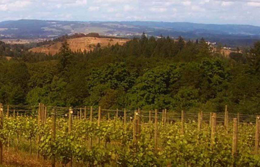 Oregon Wine Country | Willamette Valley Wine, Wineries & Tasting Rooms
