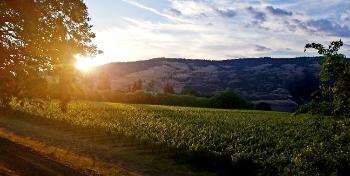 Garnier Vineyards