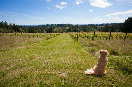 Canines Uncorked
